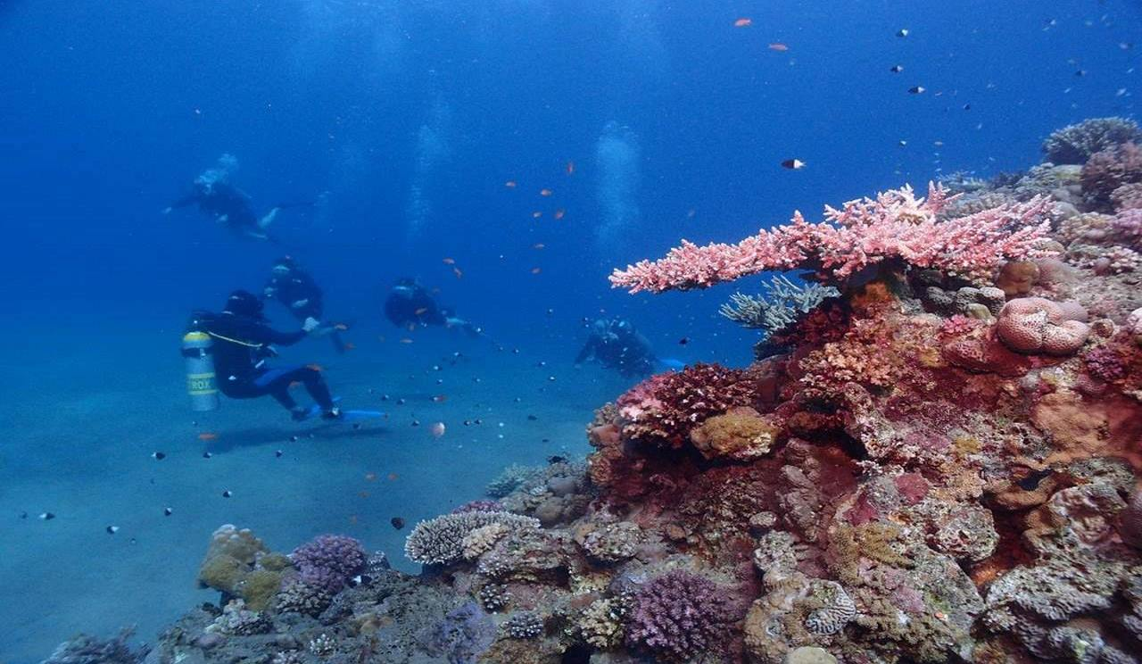Go snorkelling and diving in the Red Sea_Fun things to do in Egypt