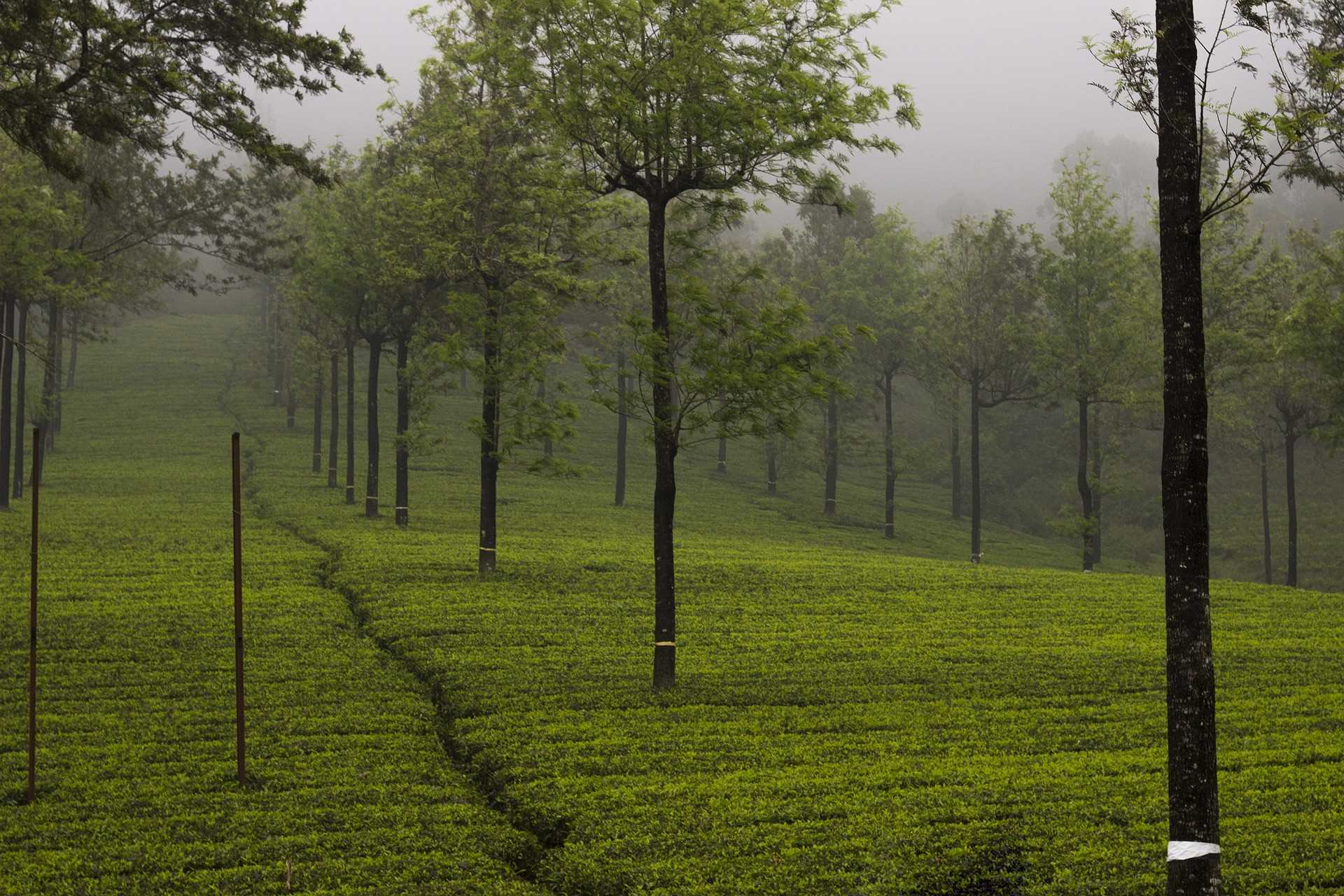 Honeymoon Destinations in India - Munnar
